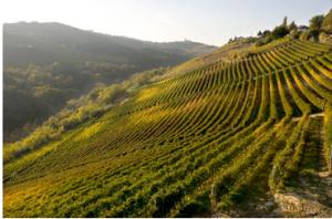 ワインと当たり年 – Vini e annate pregiate