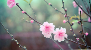 花びらの多い – Petaloso